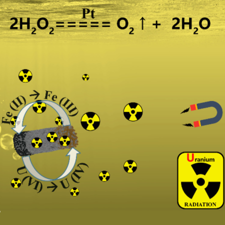 Schematic diagram of micromotor in uranium removal and the proposed mechanism.